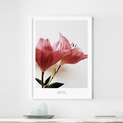 핑크 백합 꽃 그림 인테리어 액자 모음
