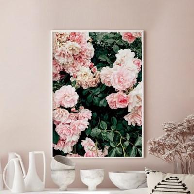 프레리 모란 목단 꽃 그림 인테리어 액자