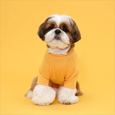 플로트 베이직티셔츠 강아지옷 옐로우