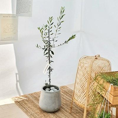 반려식물로 순한 대형화분 올리브 그레이화분