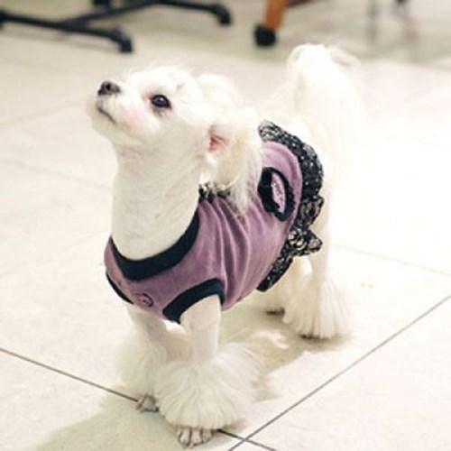 애견 미니 드레스 핑크 L 1P 강아지옷 애견옷 개옷