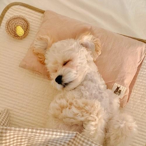 댕나잇 누빔 순면 패드 중형 대형 강아지패드 강아지매트 고양이패드