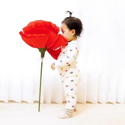 자이언트 카네이션 대왕종이꽃