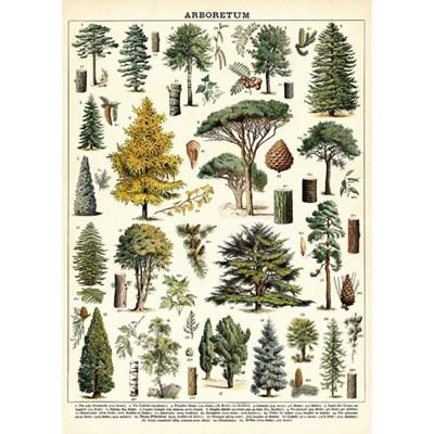 카발리니 포스터-Arboretum