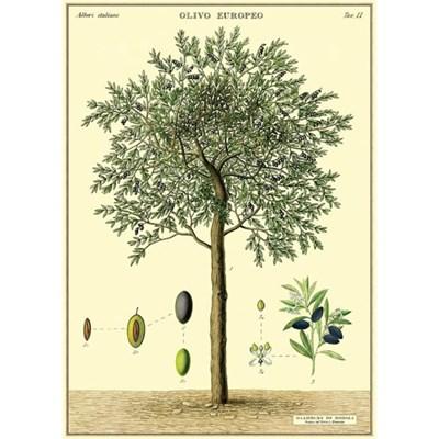 카발리니 포스터-Olive Tree