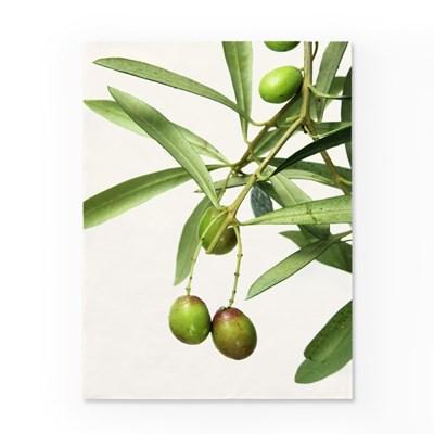 인테리어 패브릭 포스터_그린올리브열매