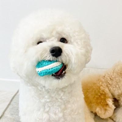 마카롱 삑삑 바스락 장난감_강아지 삑삑이 장난감