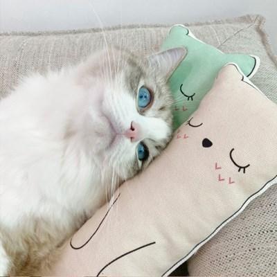 개달당 마시멜로 캣닢패드 고양이 쿠션 베개 장난감