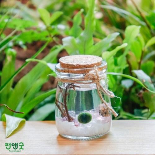 수경재배 반려식물 행운목 마리모 어항  푸딩병 DIY 선물 세트