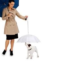 강아지 우산 Dog umbrella