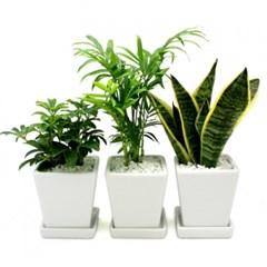 공기정화식물심기3종세트(도자기화분포함)