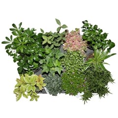 초록식물15개세트
