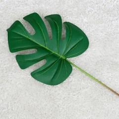 트로피칼 몬스테라 가지잎