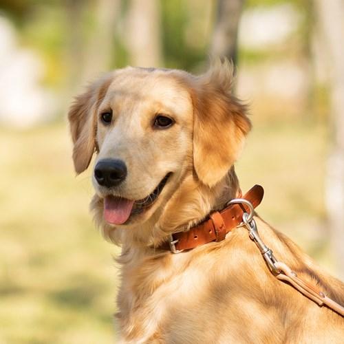 애로우 강아지 목줄 소형견 중형견 대형견
